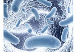 Microbiote-un-site-pour-tout-savoir-sur-les-100-000-milliards-de-bacteries-que-nous-hebergeons_exact441x300