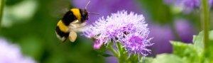 RTEmagicC_Pollination5.jpg